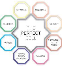 skin-nutrients