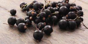BLOG-sheena-blackcurrants